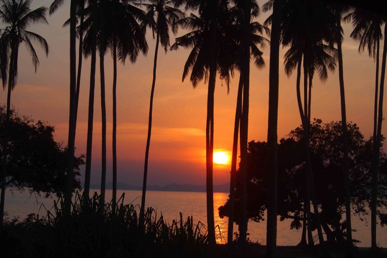 Sunset among palm trees