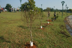 KUCHING – TREE PLANTING CEREMONY