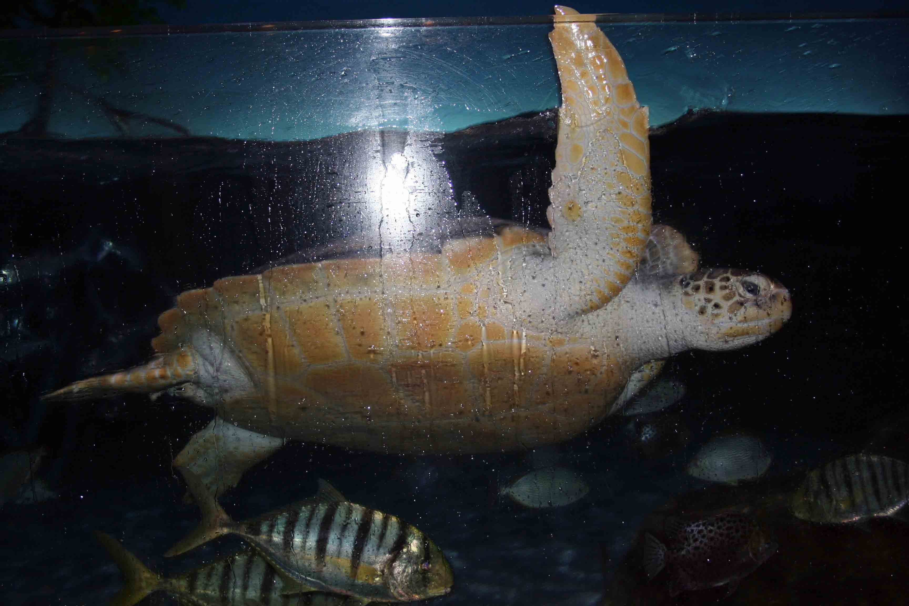 Siam Ocean World The Largest Aquarium In South East Asia Thailand Et Ticket Sea Life Only Adult