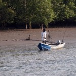 Daily routine at Santubong Mangroves Swamps