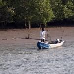 Daily routine at Santubong Mangroves Swamps