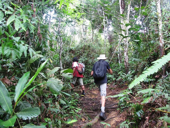 Trekking at Gunung Gading