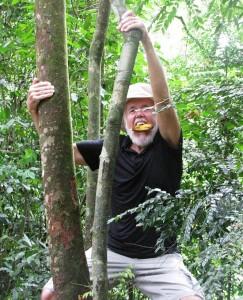 Ready to deal with an orangutan