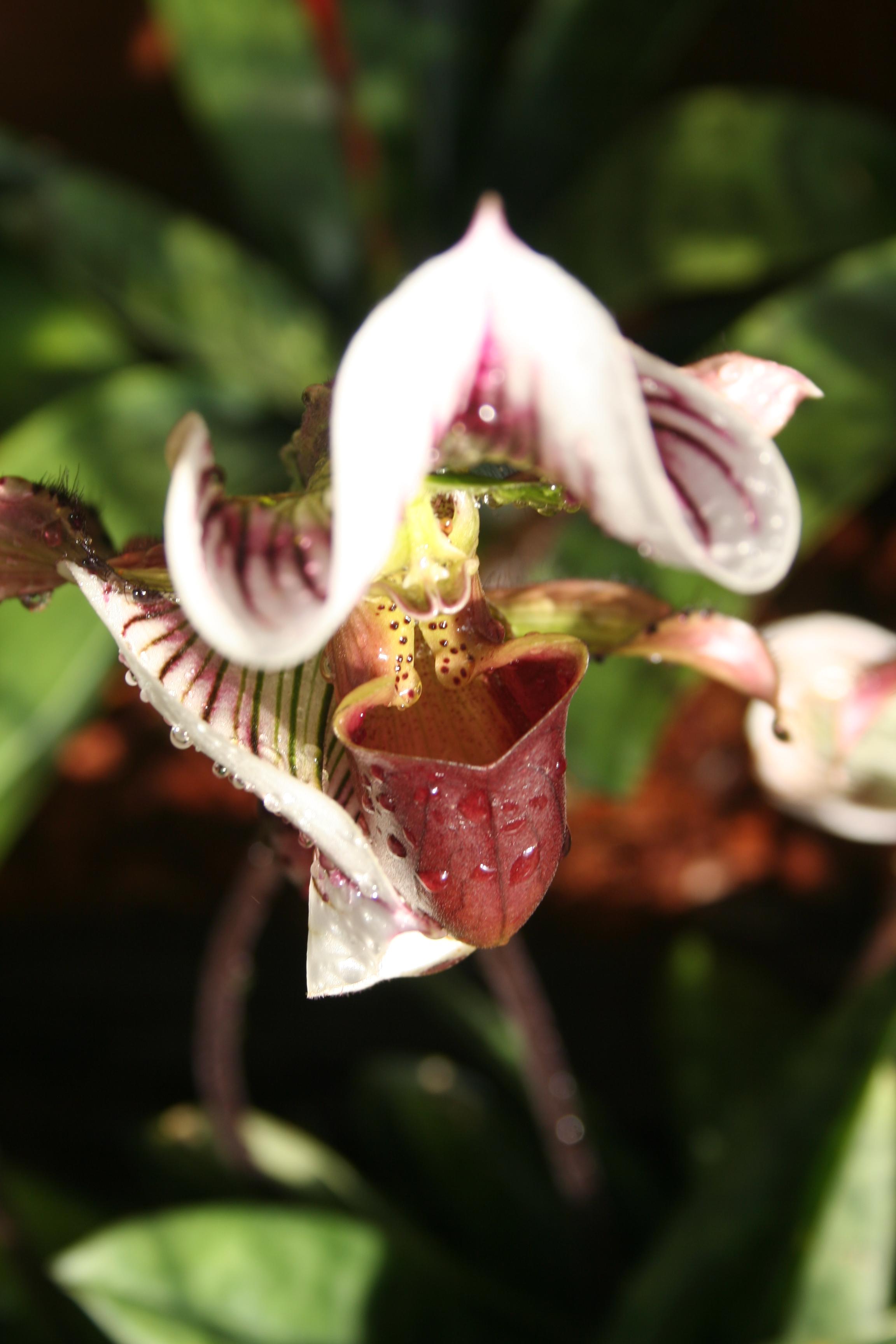 Il periodo della fioritura di orchidee a krabi da marzo for Orchidea fioritura
