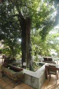 the kabiki tree