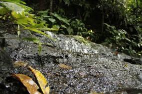 Annah Rais – Trek to the waterfall