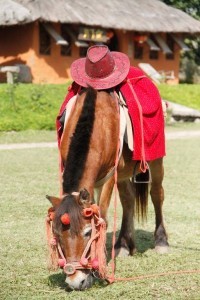 horse riding available!