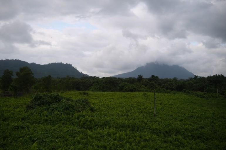 Lush vegetation in the Santubong area