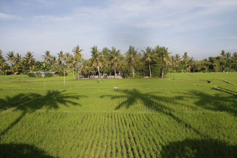 The rice paddies by the villas