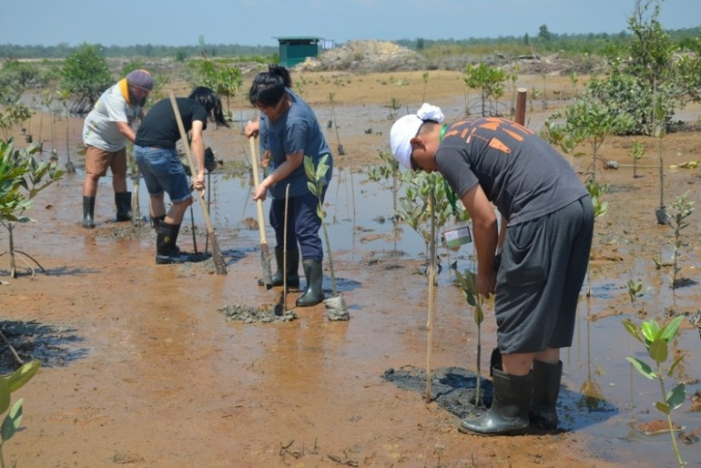 Planting the samplings at Kuching Wetlands National Park