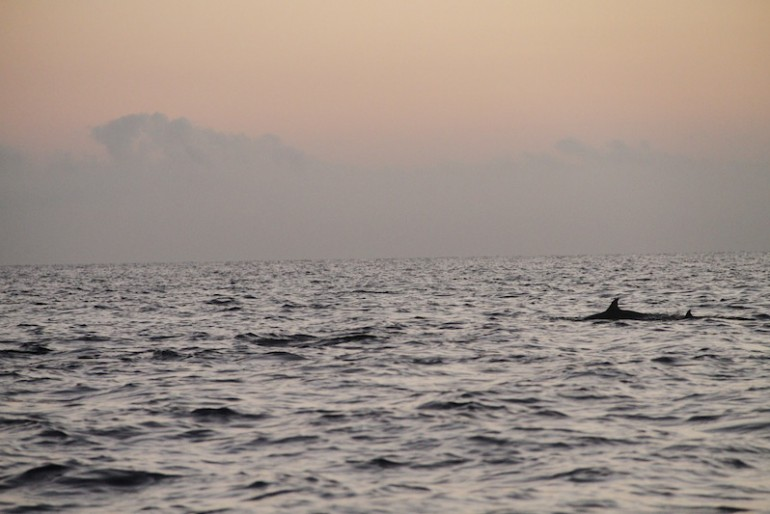 Watching the dolphins