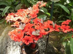 Butterflies at Entopia