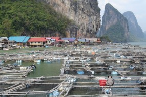 Adventure in the Phang Nga bay