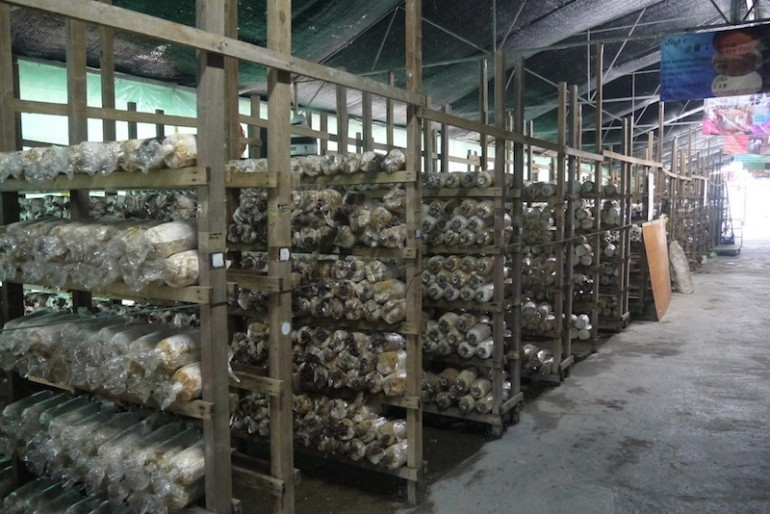 Mushrooms farm