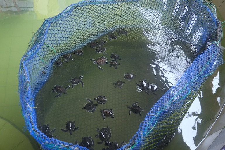 Turtle babies at the centre