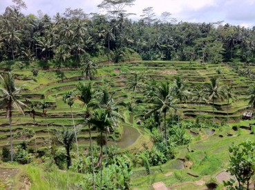 Tegallagang rice terraces