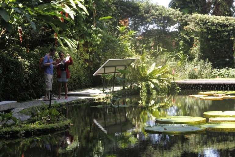 Tropical Spice Garden pond