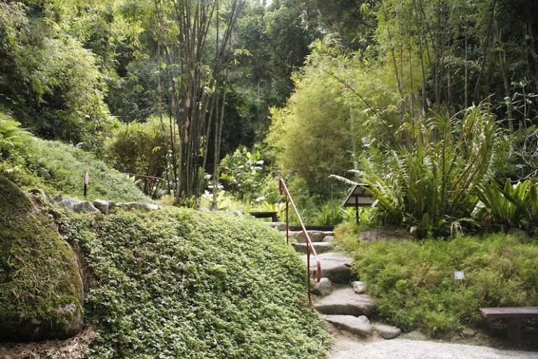 Tropical Spice Garden bamboo garden
