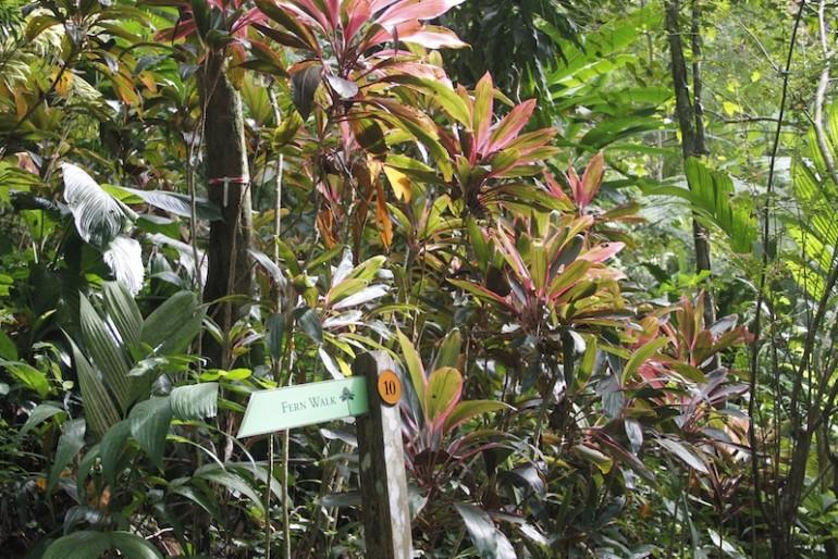 Tropical Spice Garden bromelias area