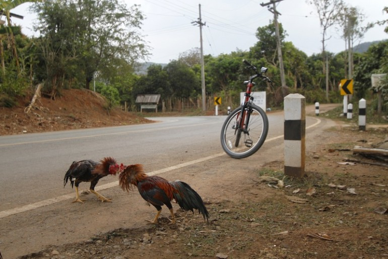 Improvised roadside cock fighting