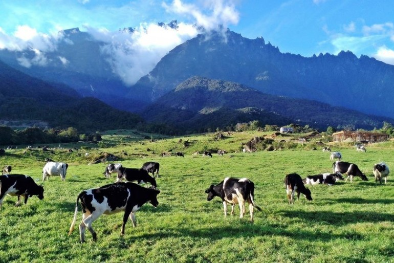 View of Mount Kinabalu from the farm