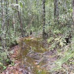 Trails covered with swamp