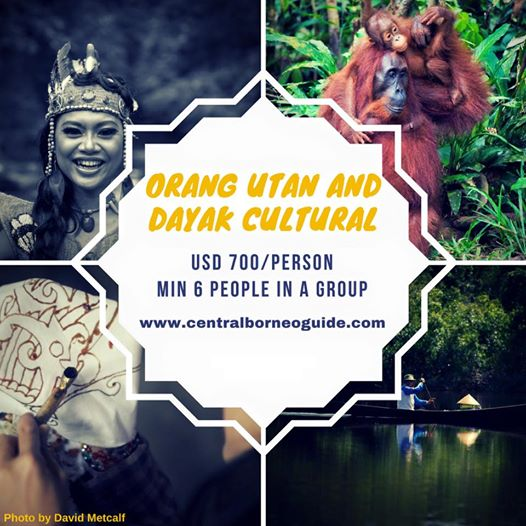 Orang Utan and Dayak Cultural Tour