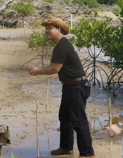 Mangroves planting begins