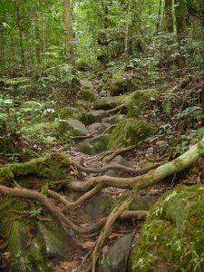 A rocky track
