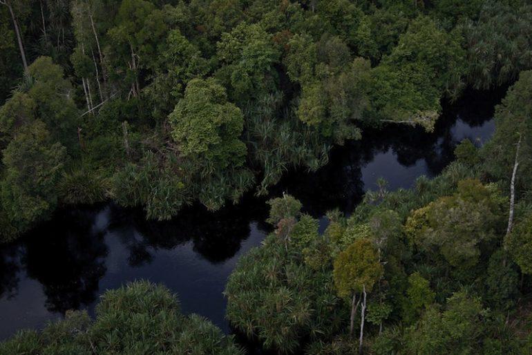 A maze of swamps at Sebangau National Park