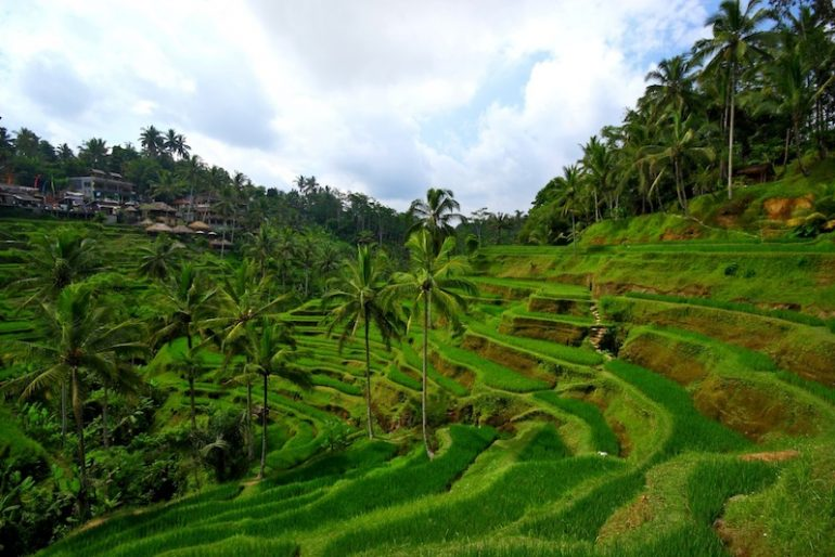 Tegallagang rice terraces