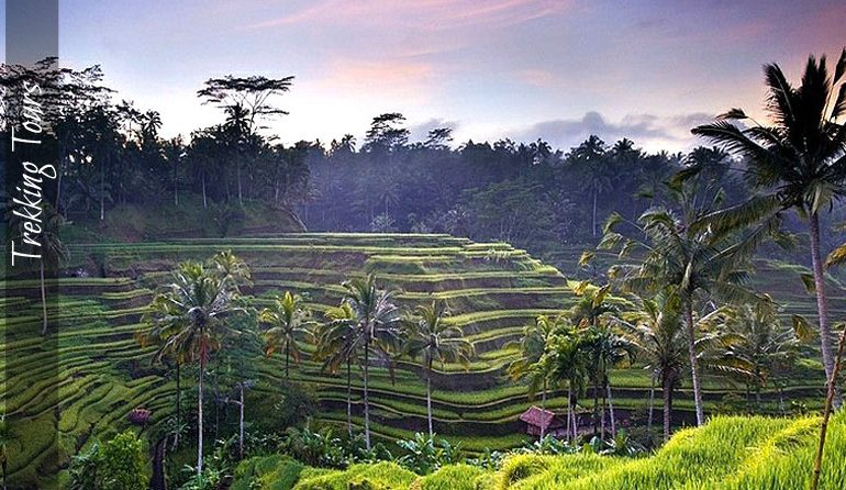 Trekking tours with Bali Eco Tours