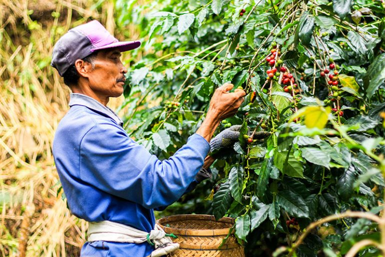 Coffee farmer at the plantation