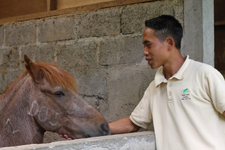 Putu and the horses