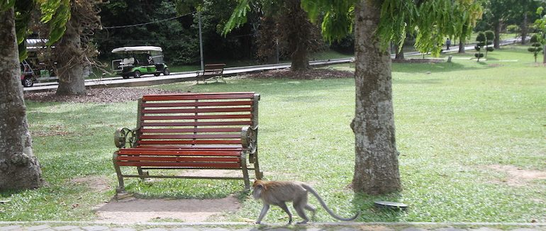 A cheeky monkey at the entrance