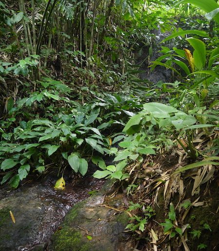 Hidden streams along the trail
