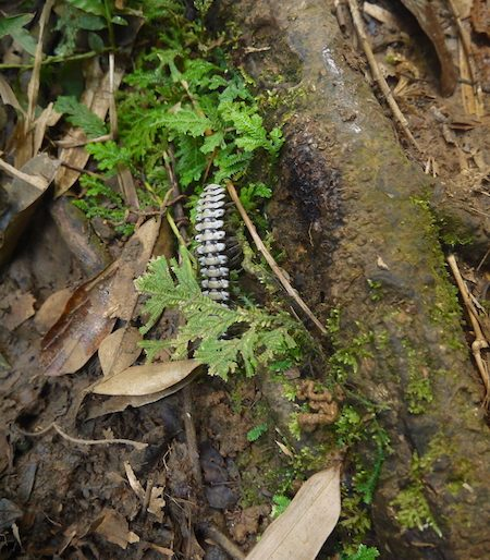 Insects are the sign of a healthy habitat