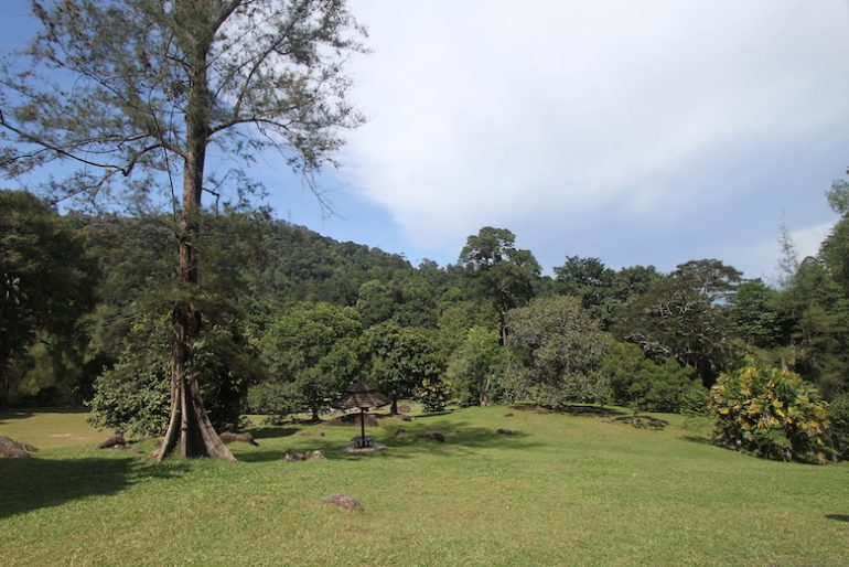 Lush vegetation for a great relaxing day