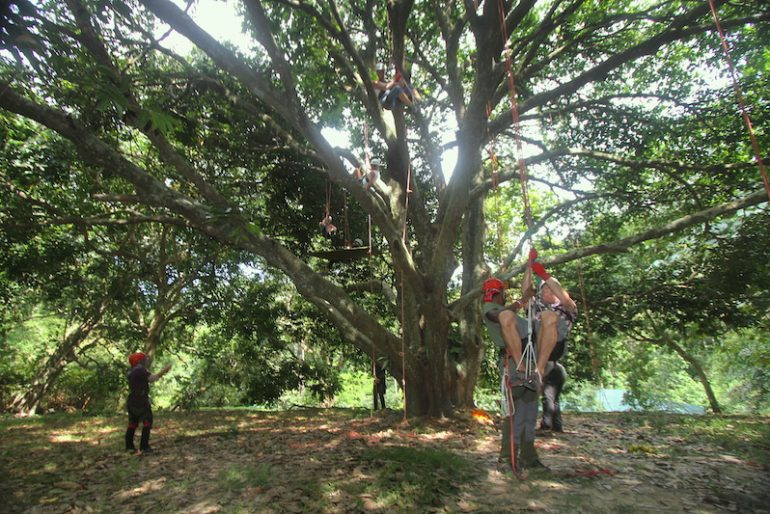 Tree climbing company with tourists