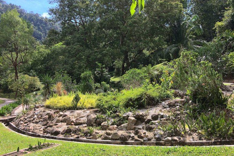 Vegetation and gardens at the Penang Penang botanic gardens