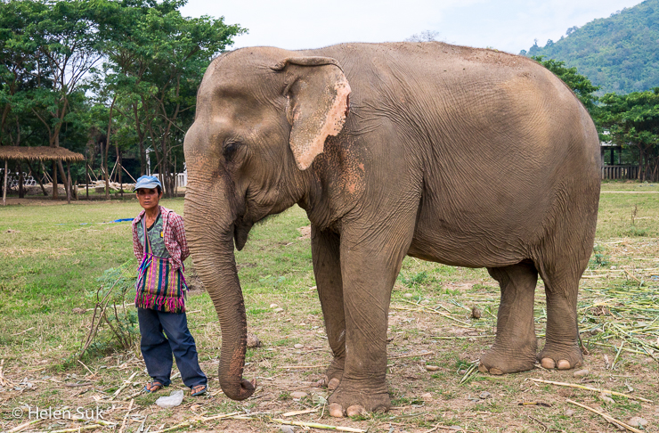 Mahout with its elephant