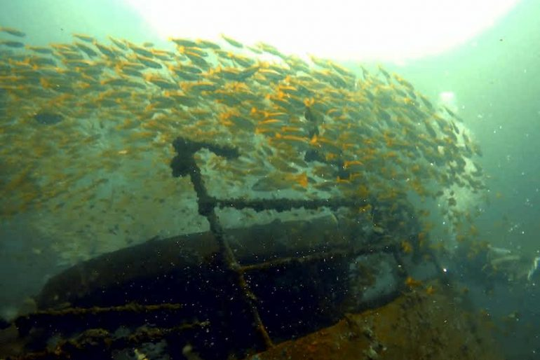 A group of fish swim freely around a wreck