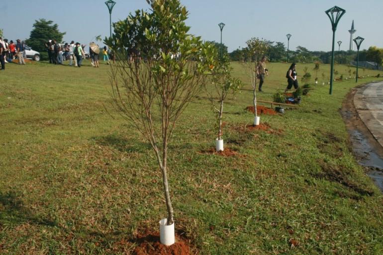 Tree planting in Kuching
