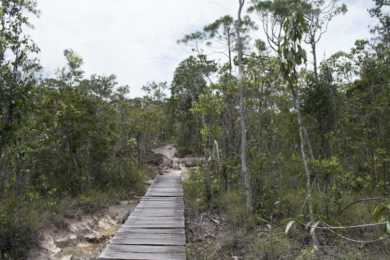 Dry jungle with wooden trail