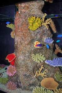 Corals and fishes at Siam Ocean World