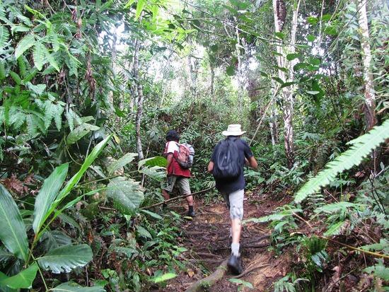 Trekking at Gunung Gading