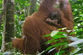 A spasso con gli orangutan a Medan