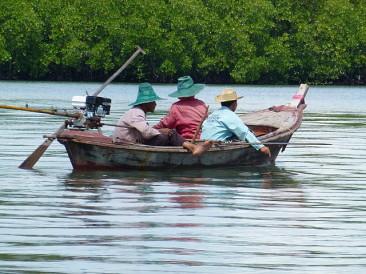 Koh Lanta Mangrove Way