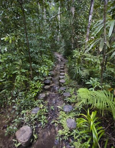 Jungle paths at Sa Morakot