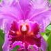 Orchidee di Krabi – Pensieri in fiore